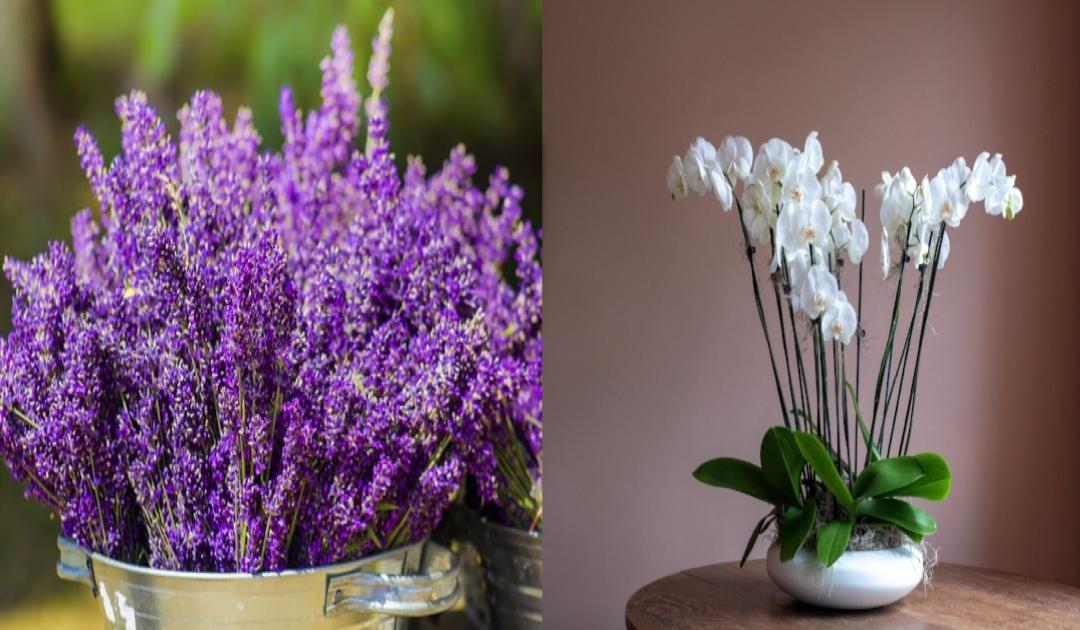 As flores ideais para cada divisão da sua casa