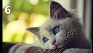 10 coisas comuns que podem matar o seu gato