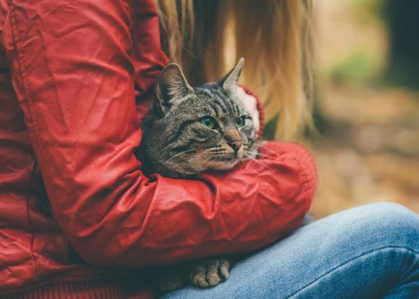10 coisas comuns que podem matar o seu gato - Conselhos para evitar que o seu gato sofra uma intoxicação