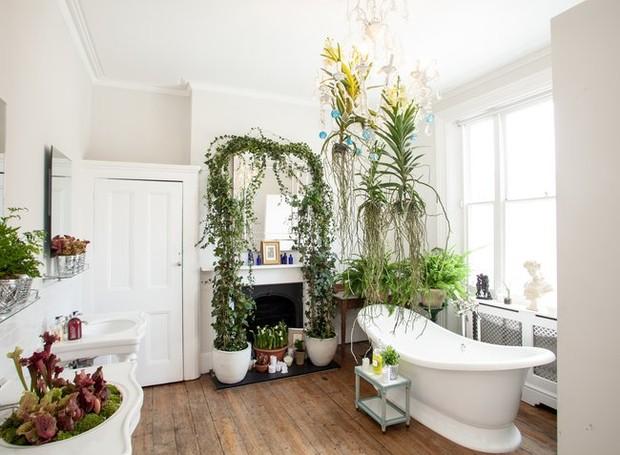 6 plantas para decorar o banheiro