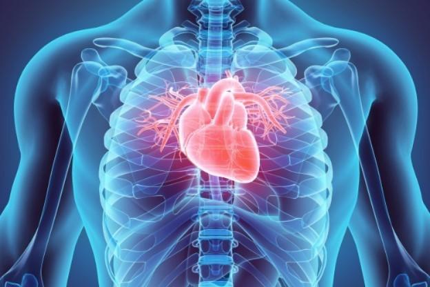 Slide 8 de 8: Os pimentões e pimentas verdes são ricos em vitaminas A e C, que são valiosas para fortalecer as paredes do músculo cardíaco. O calor desenvolvido pela pimenta aumenta o fluxo sanguíneo por todo o corpo, reduzindo a pressão arterial.