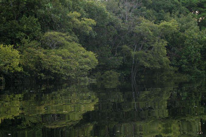 Vista das florestas alagadas da Amazônia, em Manaus (foto: Eduardo Vessoni)