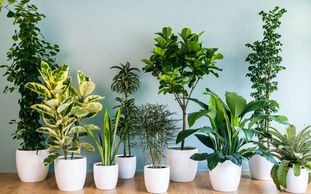 7 plantas que afastam a negatividade da casa