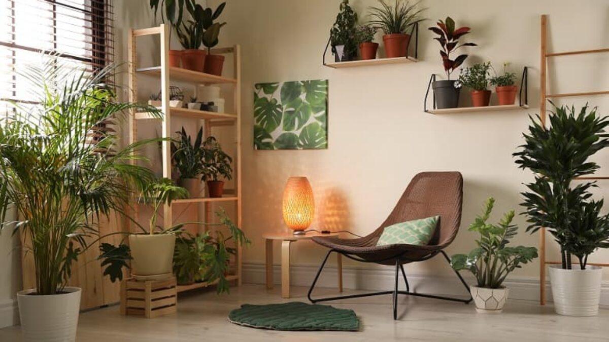 Plantas para apartamento pequeno: 10 dicas essenciais para utilizá-las