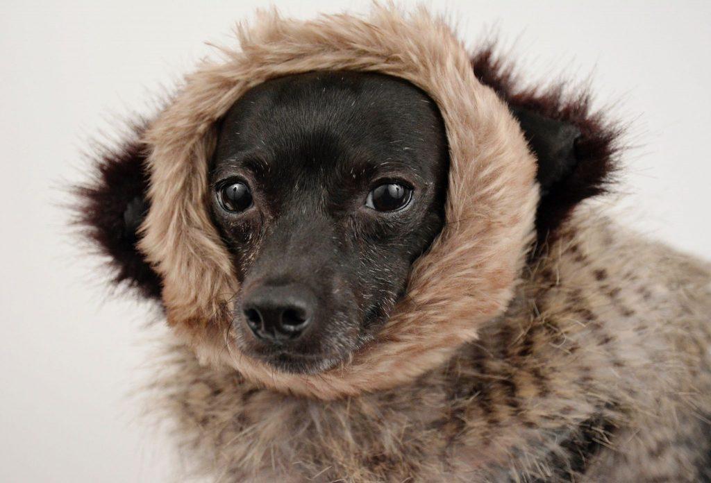 Como proteger os seus animais no Inverno